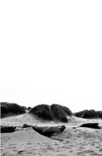 b&w sand dunes