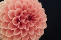 Peach Dahlia Notecard